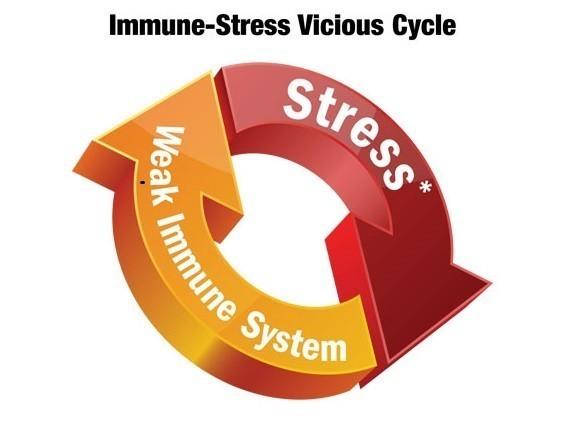 Стресът и имунитетът